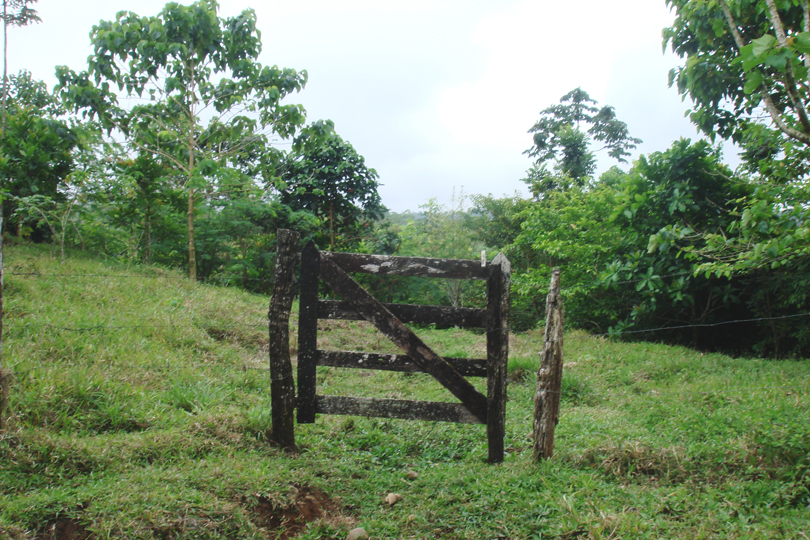 Tree growth by entry gate